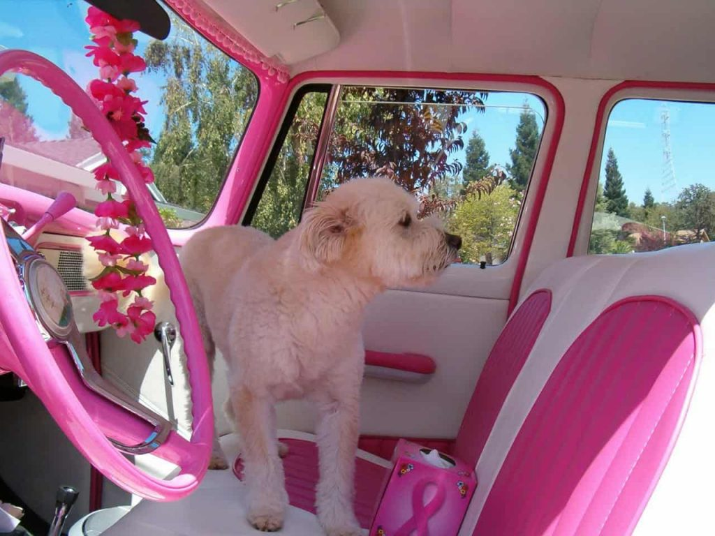 The Best Ways to Personalize Your Car- these are great!