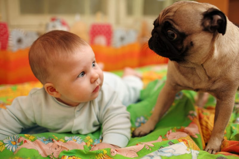 Owning A Dog May Help Prevent Your Child From Developing Asthma
